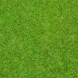 Stock Photo: Green grass pattern