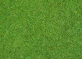 Green grass pattern — Stock Photo