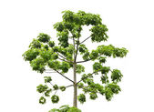 Fresh green tree — Stock Photo