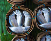 Makrela ryby — Stock fotografie