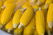 Fresh corn in boiling water — Stock Photo