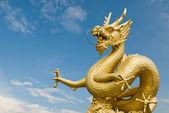 O dragão do grande mar do oceano índico — Fotografia Stock