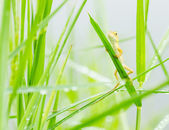 Small lizard hiding on fresh leaves green grass — Stock Photo