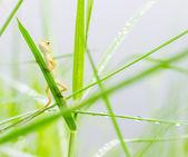 Lizard hiding on fresh leaves green grass — Stock Photo