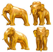 Golden elephant — Stock Photo