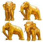 Goldener elefant — Stockfoto