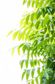 Green leave — Stock Photo