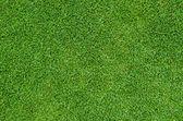 Güzel yeşil çim desen — Stok fotoğraf