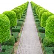 Outdoor landscape garden — Stock Photo