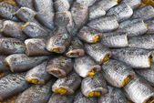 Dry Gourami fish — Stock Photo