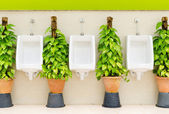 Restroom interior with white urinal row and ornamental plants — Foto Stock
