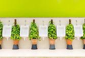 Toalett inredning med vita pissoar rad- och prydnadsväxter — Stockfoto