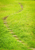 Stairway on green grass. — Stock Photo
