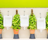 Restroom interior with white urinal row and ornamental plants — Foto de Stock