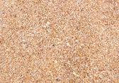 Shell pozadí na písčité pláži — Stock fotografie