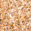 Shell background on a sand beach — Stock Photo