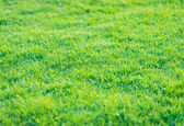 Green grass pattern from golf course at sunset tim — Stock Photo