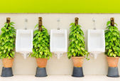 Restroom interior with white urinal row and ornamental plants — Photo
