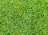 Green grass pattern from golf course at sunset time — Stock Photo