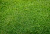 Golf sahasında günbatımı tim yeşil çim desen — Stok fotoğraf