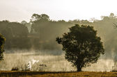 Tree side the lagoon in morning mist — Stock Photo
