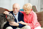 Senior Couple - Dog Lovers — Stock Photo
