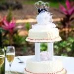 Gay Wedding Cake in Garden — Stock Photo #28876919