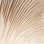 Close up mushroom — Stock Photo #12313402