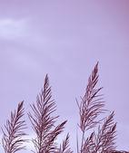 Grass on sunraise — Stock Photo