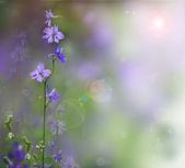 Beautful pink flowers — Stock Photo