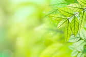 Background Nature green leaves — Stock Photo