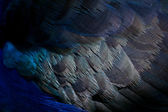 Close up feather texture — Stock Photo
