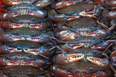 Softshell zwarte krab — Stockfoto