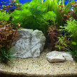 Plant aquarium - Photo