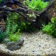 Plant aquarium - Foto Stock