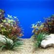 Stock Photo: Plant aquarium