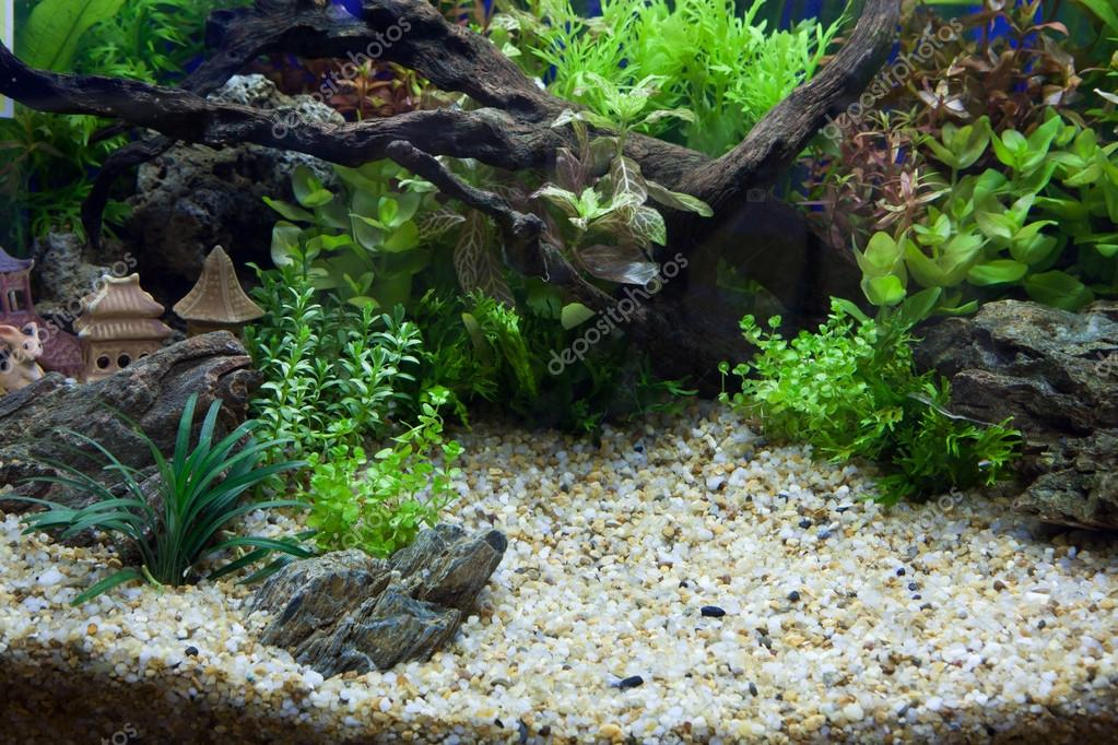 Plant aquarium — Stock Photo #19147835