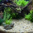 aquarium plante — Photo