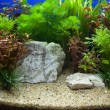 Plant aquarium - Stock Photo