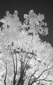 Infrared tree — Stock Photo