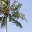 Palm tree — Stock Photo #26288423