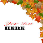 Autumn maple leaves with your copy space — Stock Photo