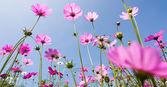 紫色的花朵反对票蓝色天空 — 图库照片