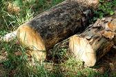 Pila de pino registra en hierba verde en el borde del bosque de verano. — Foto de Stock
