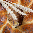 A fresh loaf of bread sprinkle with poppy seeds. — Stock Photo #12660726