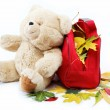 Autumn theme. Colorful leaves autumn in a red bag and a teddy be — Stock Photo