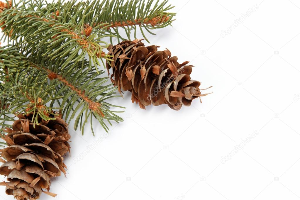 Spruce branch with cone on a white background — Stock Photo #13899287