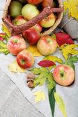 秋天的主题。苹果和核桃亚麻画布上. — 图库照片