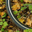 Touring bicycle wheel with background of fallen leaves — Stock Photo