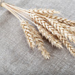 Stock Photo: Ears of wheat on canvas.